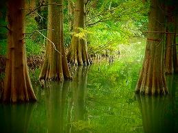 194 10月 九大の森.jpg