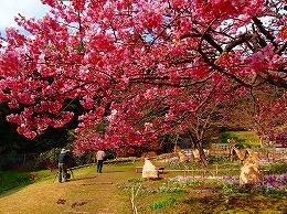 493月 白野江植物園.jpg