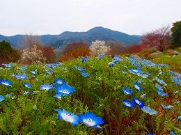 73 3月 福智山山麓公園.jpg
