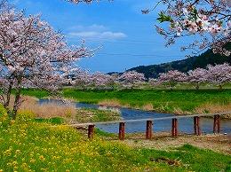 80 4月 犀川.jpg