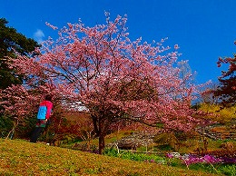 64 3月 白野江植物園.jpg